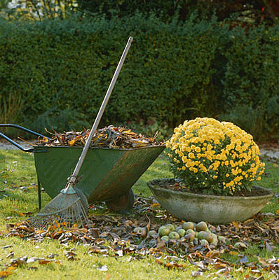 Rake_Wheelbarrow_Leaves_d64e31fb508e156b_raking.xlarger